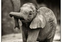 Elephant Cool / All about elephants and their beauty.