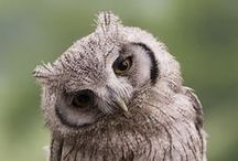 Owls / This is a collection of photographs about owls. One of the most magnificent birds ever.