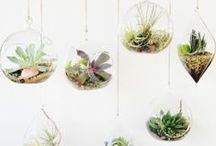 terrarium & succulents / bitkisel bakım :))