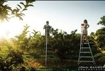 Orchard Engagement Sessions / An orchard is a great location for an engagement session.