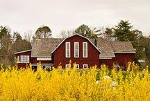 Blackberry Farm Weddings / Blackberry Farm Weddings