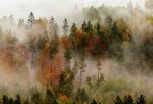 ⋆ Nature Inspiration | creative and inspire ideas ⋆ / Picture of nature and faune