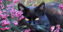 Cat Bundy R.I.P. / Alles um Kater Bundy. Leider ist er im Mai 2016 über die Regenbogenbrücke gegangen ♥