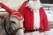 Rencontre VIP avec le Père Noël ! / De temps en temps, le père Noël quitte la Laponie pour rejoindre sa résidence secondaire dans le Queyras ! histoire de changer un peu d'air sans être trop désorienté ! Partez à sa rencontre via un séjour VIP insolite !