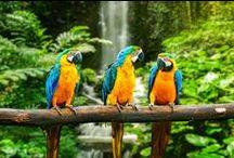 birds / I can't fly :(