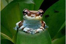 Amazing amphibians / by John Clare
