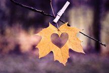 My favourite season / Autumn