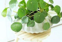 # Plants