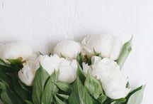 BOTANICS / Beautiful florals, botanics and greenery. Botanical inspiration.