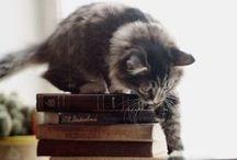 Książki i koty
