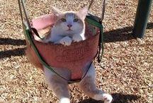 CATS / О котах - забавные фотографии