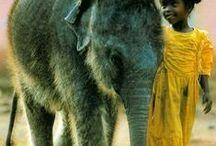 ELEPHANTS / Фотографии слонов, а также вязание их спицами и крючком