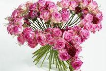 Avalanche - Diese blumige Liebeserklärung trifft mitten ins Herz! / Die Spitzenqualität dieser außergewöhnlichen Rosen steht für Profis außer Frage. Rosen der Sorte Avalanche sind die erste Wahl, wenn es um die florale Dekoration für royale Hochzeiten, gesellschaftliche Großereignisse und Empfänge geht. Diese neuen Arrangements mit der Avalanche sind auch für Ihre private Liebeserklärung die richtige florale Begleitung. Mit der Rose Avalanche trifft Ihre emotionale Botschaft garantiert mitten ins Herz.