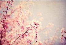 rose /pink