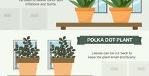 Urban Gardening Infographics / Infographics are the new way to share information like statistics, facts and knowledges. hey can improve cognition by utilizing graphics to enhance the human visual system's ability to see patterns and trends. it is perfect for us, gardeners!