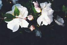 • Flowers • / Simply just beautiful.  / by Tiarne Lee