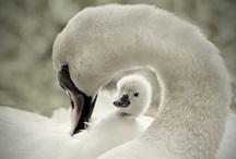 For the Love of Tweet / Birds, Birdhouses and Feeders / by Laura Wiley Warren