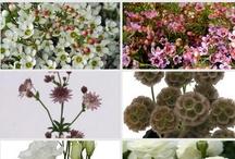 Winter wedding flowers / Rustic winter wedding flowers - ranunculus, pine cones, hellebores, plum tones