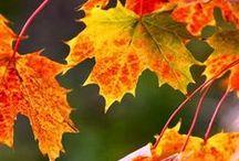 Feels like fall in the air / by Nancy Knox