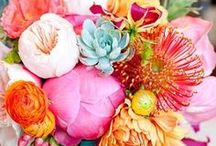 I Love Colors! / Everything colorful & beautiful.
