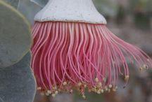 Belles plantes / Fleurs et plantes, cactus et succulentes...