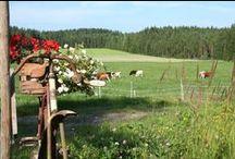 Jokinotkon karjatila, Keitele / Jokinotkon karjatila on monimuotoinen maatila Keiteleellä, Pohjois-Savossa.Suoramyynnistämme on mahdollista ostaa laadukasta Hereford-naudanlihaa ympäri vuoden ja laidunkaritsaa syksyisin.Keväällä 2015 päärakennukseen avataan myymälä,kesäkahvila ja majoitustiloja.Myymälästämme saa oman tilamme lihatuotteiden lisäksi myös muiden tilojen tuotteita sekä lähialueiden käsityöläisten tuotteita.Pihapiirissä voi tutustua maatilan eläimiin, kuten nautoihin, lampaisiin, kanoihin, kukkoihin ja poneihin.