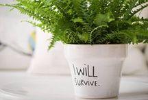 Plantas & Co. / Inspiración para decorar con plantas.