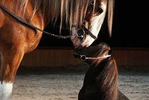Pony & horse