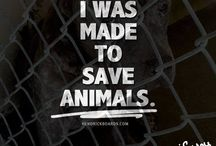 Vegetarian / Care about the animals, what did they do to you?