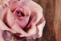 Brown - pink
