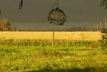 Bird Cages  / Bird cage decor.