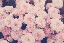Flowers.✿