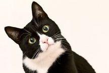 cat/kedi/katze