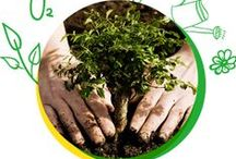 Energie Verde / Ştim cât de mult contează un stil de viaţă sănătos, într-o lume mereu în mişcare, mereu pe fugă şi asaltată în permanenţă de opţiuni.