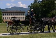 EVENTS / Photo session, carriage rides, painting classes and much more...in the Gardens of Villa Reale.