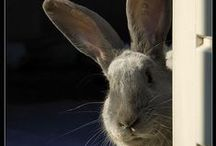 Bunnies, Rabbits, Hares & Easter