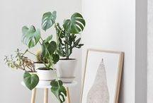 PLANTS GREEN / All green planters : tropical plants, cactus, succulentes...