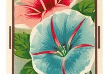 Vintage Seed Packets & Catalogues