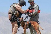 Sluneční brýle Doggles / Proč by měli psi nosit brýle? Důvodů je hodně! Chrání před UV zářením, prachem, větrem a navíc jim děsně seknou!
