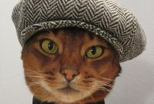 Felines / Fancy & Funny / by Judy Doshier