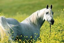 Just Horses / Anything horses... / by NH Rhinestone Shirts