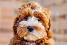 ZipIt loves puppies / The little creatures that make our hearts melt!