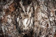 Camouflage animals / zwierzęcy mistrzowie kamuflażu - fotografie natury