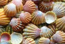 See the Seashells / by Cibiana Heiman