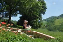 Painting courses in Italy / Some pictures from our art courses at Gorigano Art Studios
