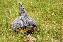 Turdles.