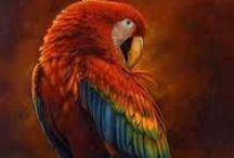 parrots<3