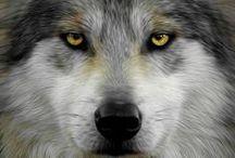 Wolf / Fasziniert von diesen Tieren ... muss ich sie einfach sammeln :)