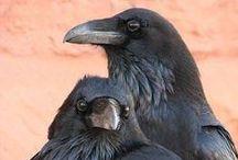Raven & Crow