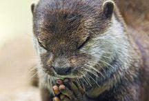Io appartengo a questo mondo!!!, / Osservare ed imparare dagli animali